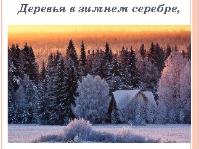 Деревья в зимнем серебре,