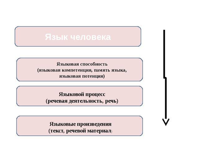 Язык человека Языковая способность (языковая компетенция, память языка, языко...