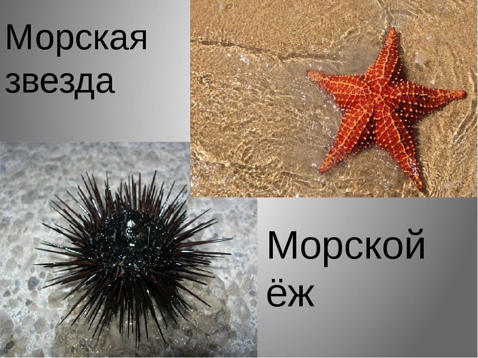 Морская звезда Морской ёж