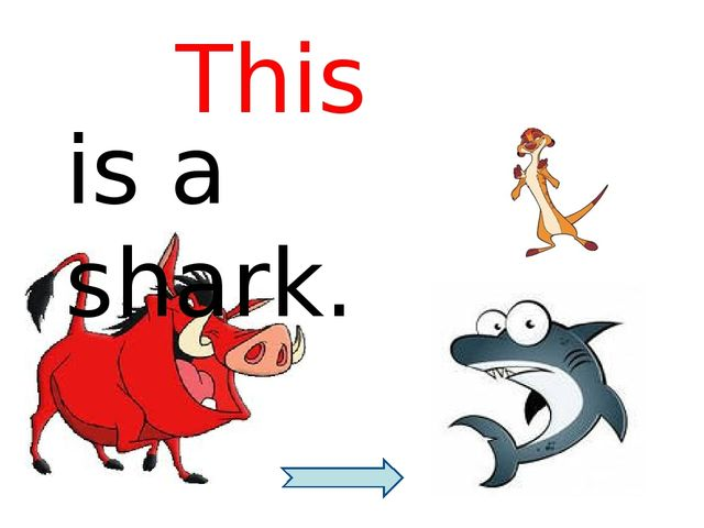 is a shark. This