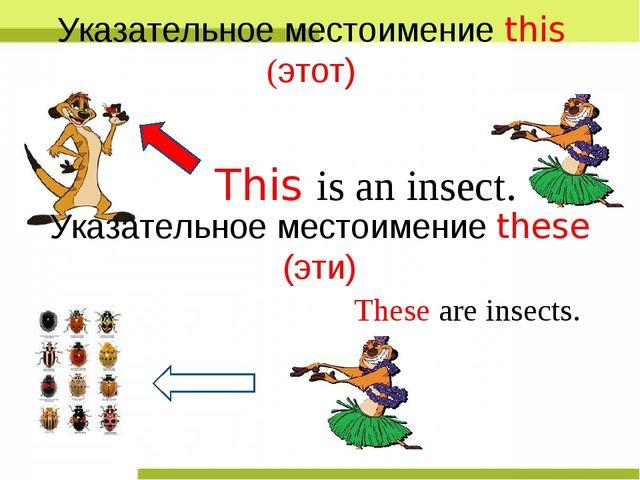 This is an insect. Указательное местоимение this (этот) Указательное местоиме...