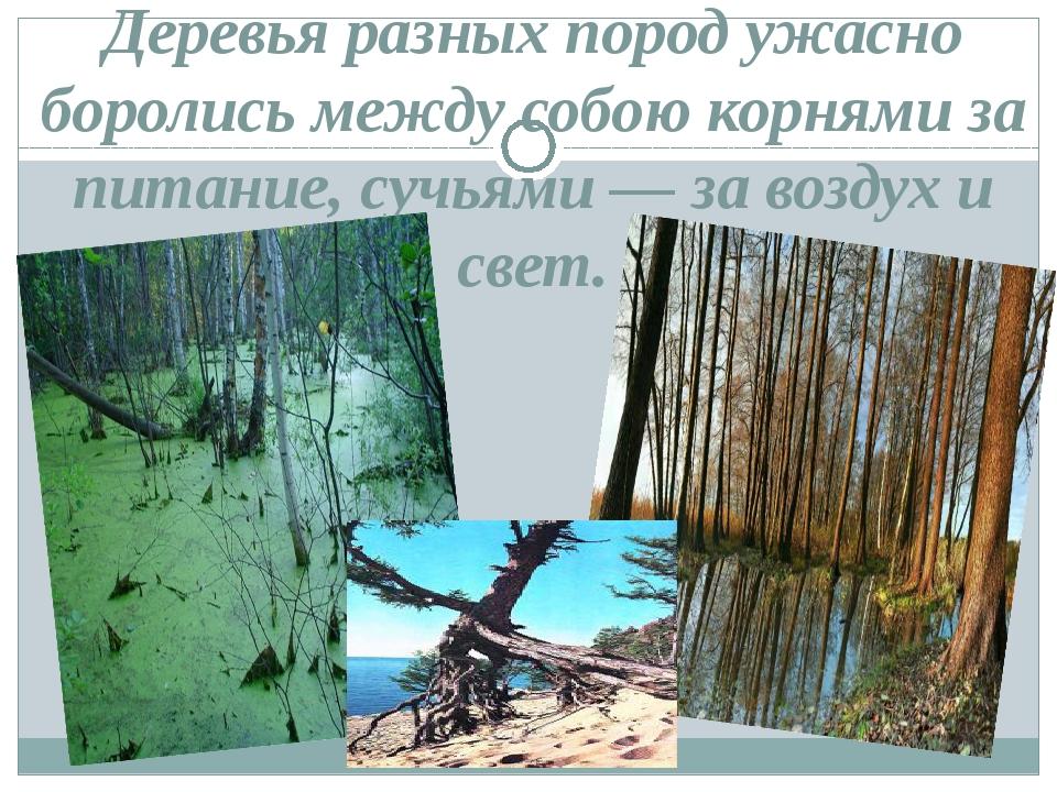 Деревья разных пород ужасно боролись между собою корнями за питание, сучьями...
