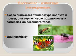 Насекомые – животные теплокровные. Когда снижается температура воздуха и почв