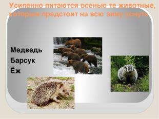 Усиленно питаются осенью те животные, которым предстоит на всю зиму уснуть Ме