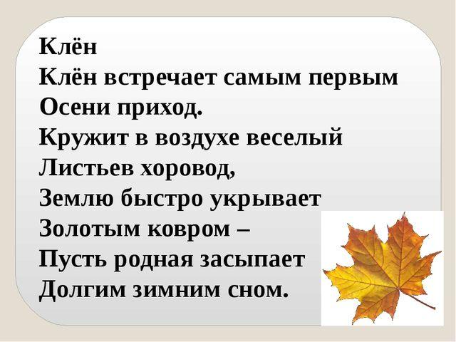 Клён Клён встречает самым первым Осени приход. Кружит в воздухе веселый Листь...