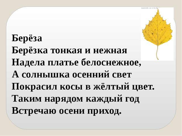 Берёза Берёзка тонкая и нежная Надела платье белоснежное, А солнышка осенний...