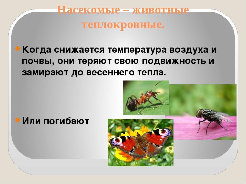 Насекомые – животные теплокровные. Когда снижается температура воздуха и почв...