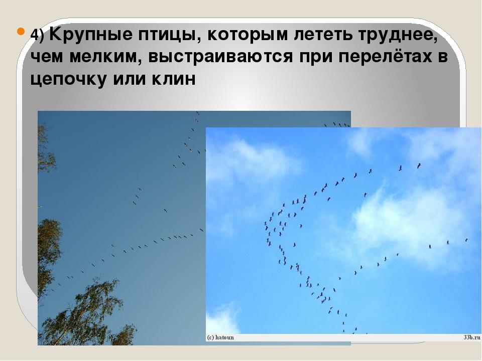 4) Крупные птицы, которым лететь труднее, чем мелким, выстраиваются при перел...