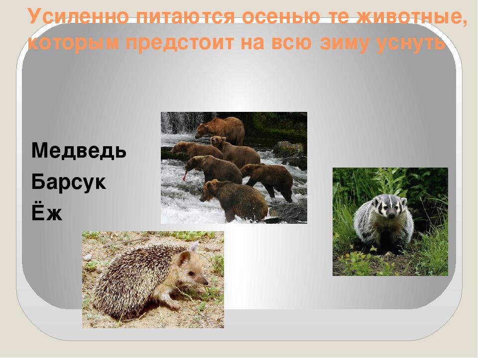 Усиленно питаются осенью те животные, которым предстоит на всю зиму уснуть Ме...