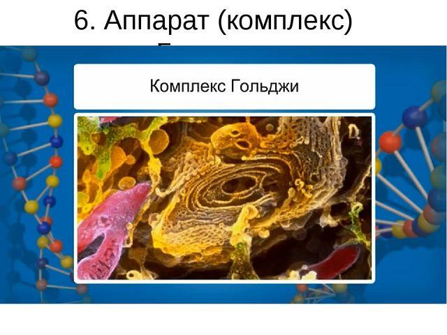 6. Аппарат (комплекс) Гольджи