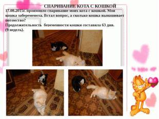 17.08.2015г. произошло спаривание моих кота с кошкой. Моя кошка заберемене