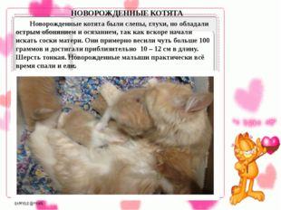 Новорожденные котята были слепы, глухи, но обладали острым обонянием и осяз