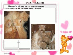 На четвёртый день котята начали лапками стимулировать поступление молока ма