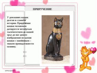 ПРИРУЧЕНИЕ У домашних кошек долгая и славная история. Приручение кошки челов