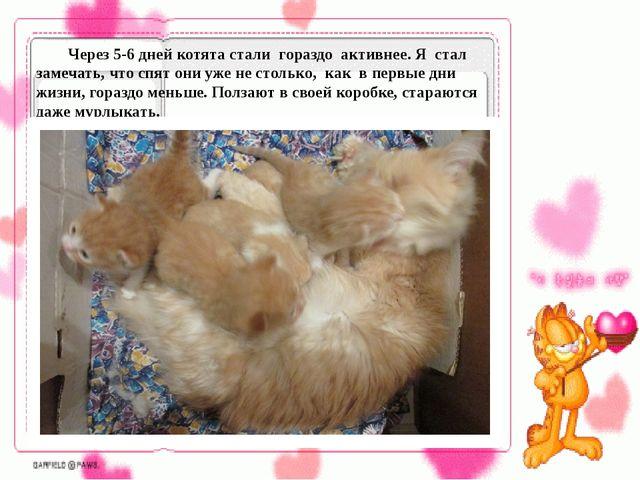 Через 5-6 дней котята стали гораздо активнее. Я стал замечать, что спят они...