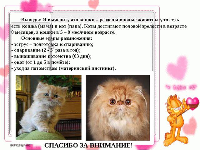 Выводы: Я выяснил, что кошки – раздельнополые животные, то есть есть кошка...