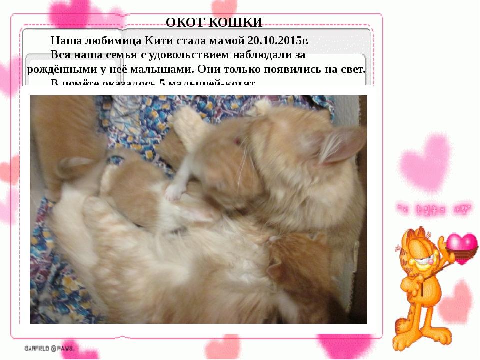 Наша любимица Кити стала мамой 20.10.2015г. Вся наша семья с удовольствием...