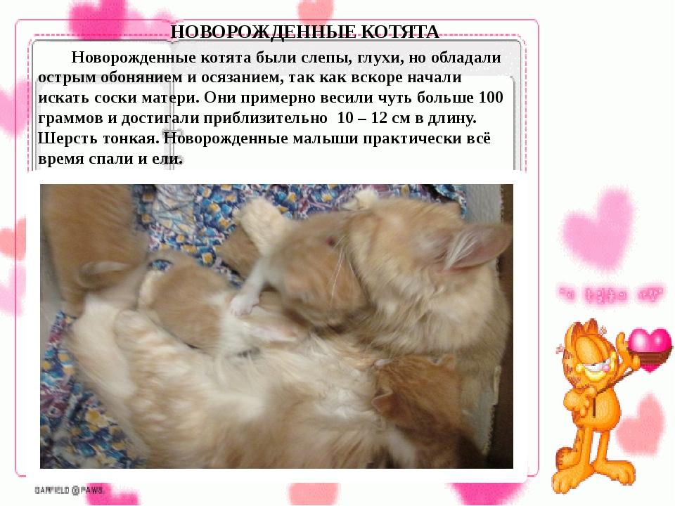 Новорожденные котята были слепы, глухи, но обладали острым обонянием и осяз...