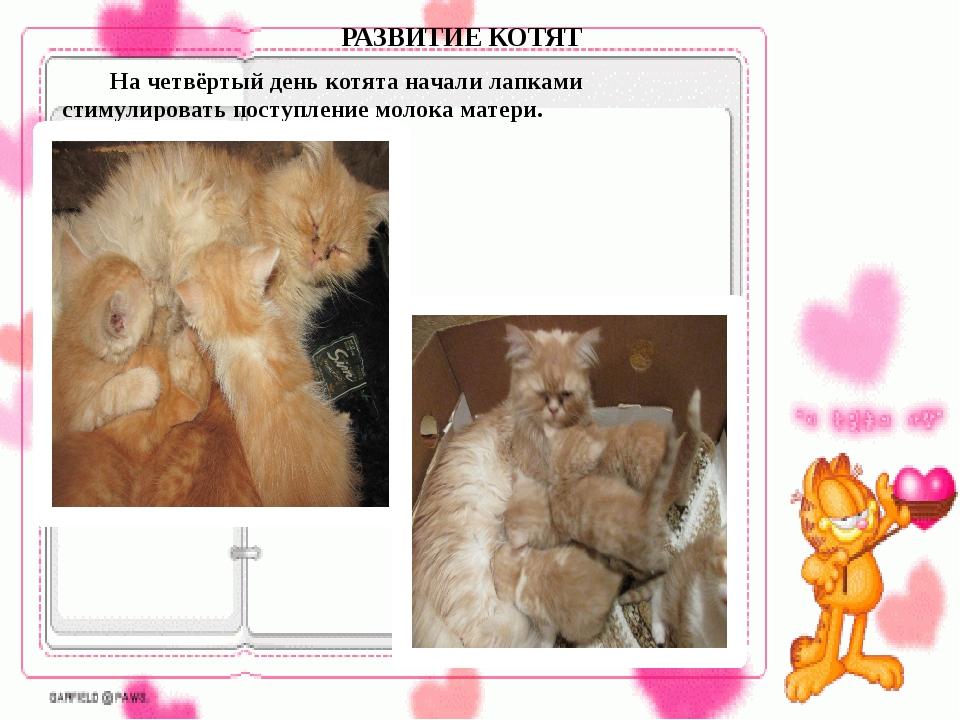 На четвёртый день котята начали лапками стимулировать поступление молока ма...