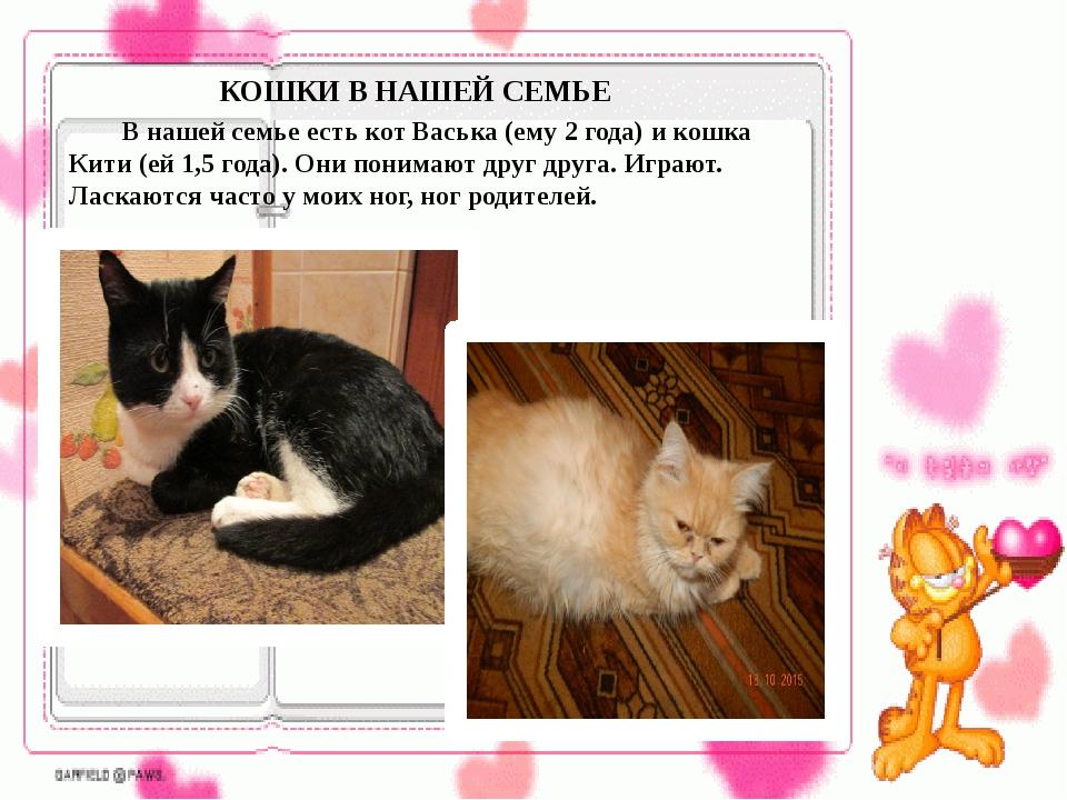КОШКИ В НАШЕЙ СЕМЬЕ В нашей семье есть кот Васька (ему 2 года) и кошка Кити...