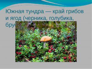 Южная тундра — край грибов и ягод (черника, голубика, брусника).