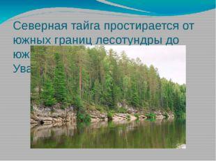 Северная тайга простирается от южных границ лесотундры до южных склонов Сибир