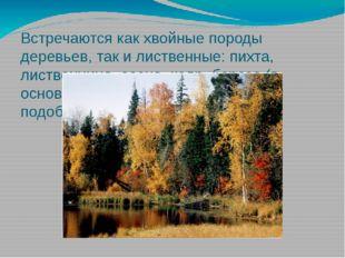 Встречаются как хвойные породы деревьев, так и лиственные: пихта, лиственница