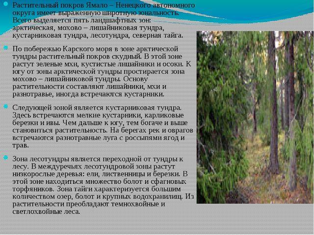 Растительный покров Ямало – Ненецкого автономного округа имеет выраженную шир...