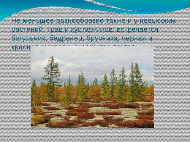 Не меньшее разнообразие также и у невысоких растений, трав и кустарников: вст...