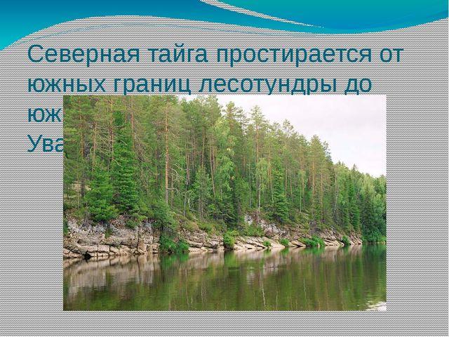 Северная тайга простирается от южных границ лесотундры до южных склонов Сибир...