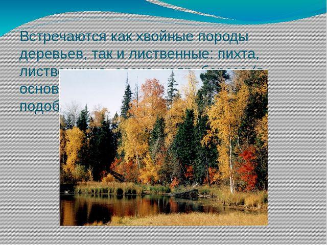 Встречаются как хвойные породы деревьев, так и лиственные: пихта, лиственница...