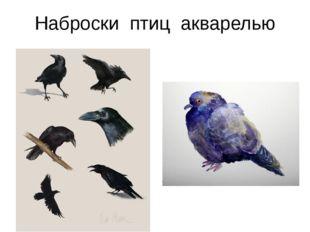 Наброски птиц акварелью