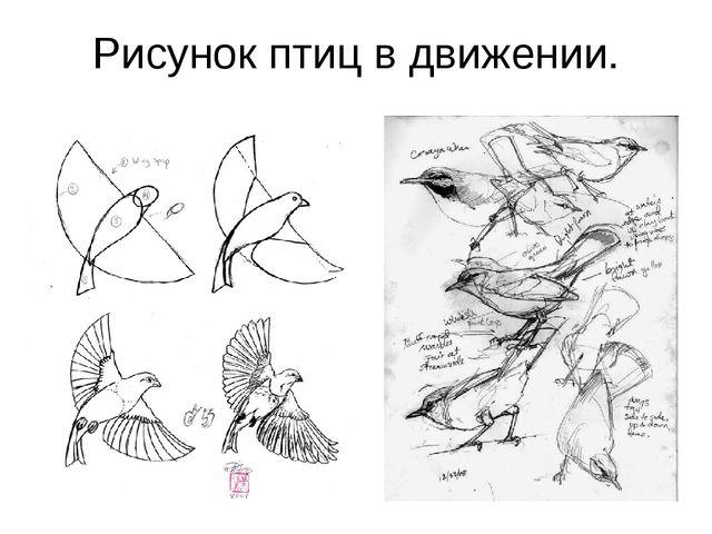 Рисунок птиц в движении.