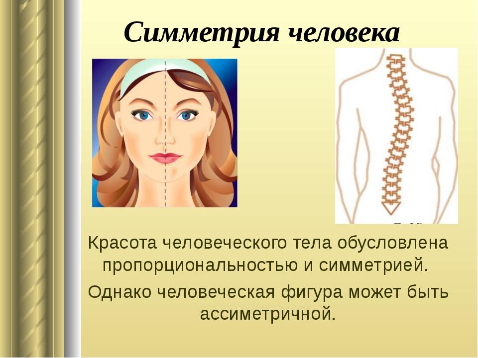 Симметрия человека Красота человеческого тела обусловлена пропорциональностью...