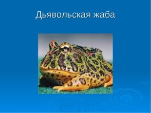 Дьявольская жаба