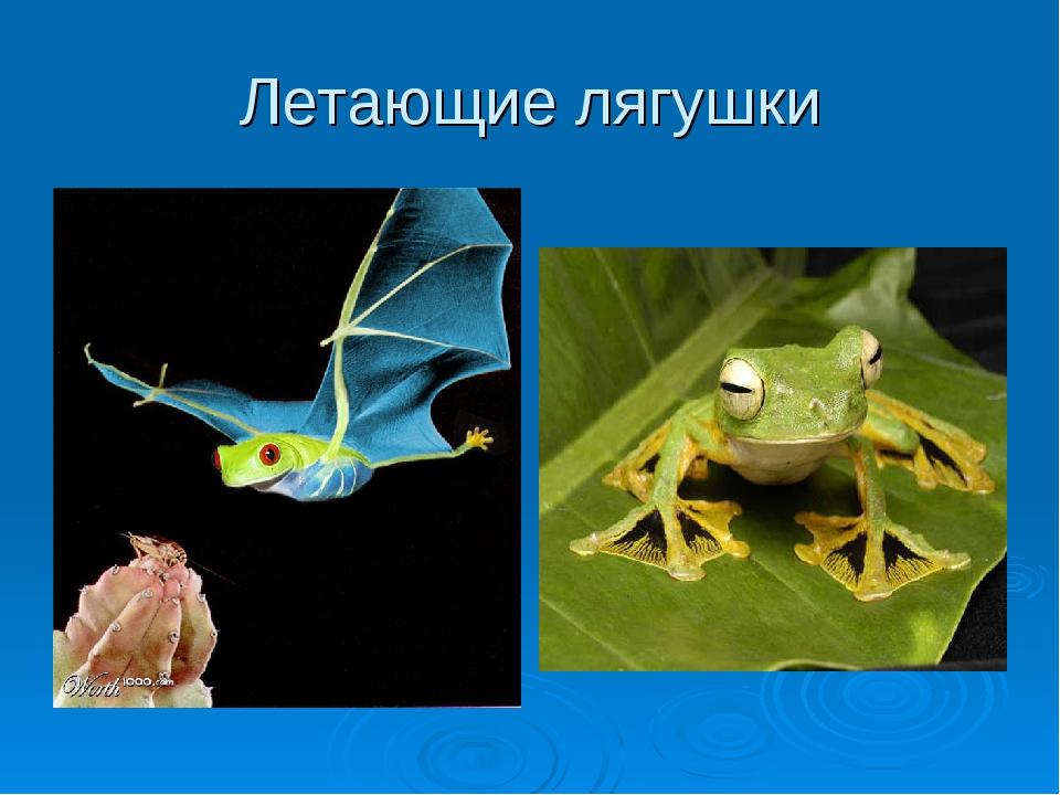 Летающие лягушки