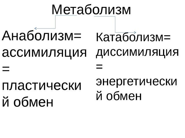 Метаболизм Анаболизм= ассимиляция= пластический обмен Катаболизм= диссимиляци...