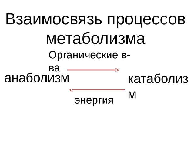 Взаимосвязь процессов метаболизма анаболизм катаболизм Органические в-ва энер...