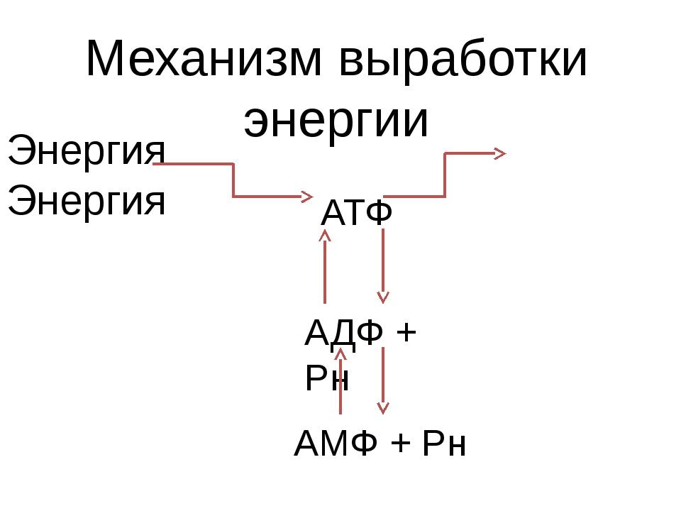 Механизм выработки энергии Энергия Энергия АТФ АДФ + Рн АМФ + Рн