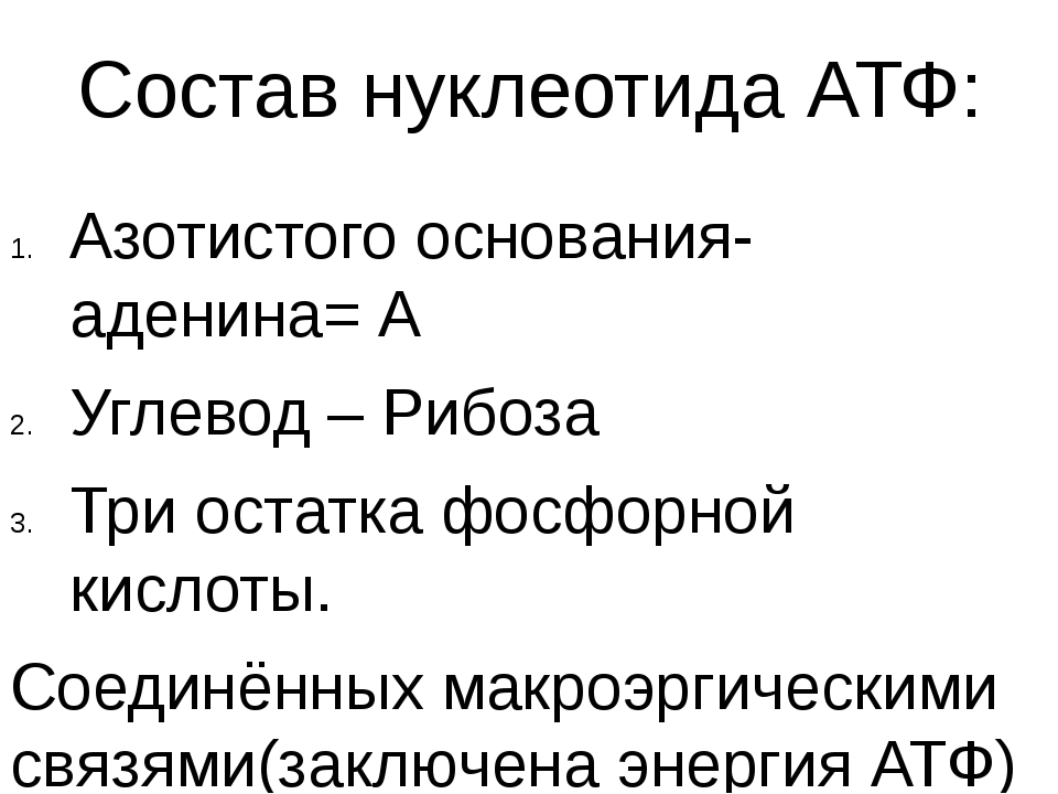 Состав нуклеотида АТФ: Азотистого основания- аденина= А Углевод – Рибоза Три...