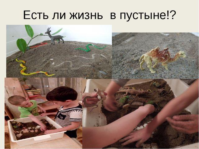 Есть ли жизнь в пустыне!?