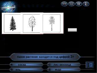 1 2 3 4 5 6 7 8 9 10 Какое растение находится под цифрой 3? А В Д С кедр сосн