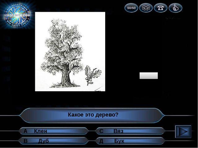 1 2 3 4 5 6 7 8 9 10 Какое это дерево? А В Д С Бук Дуб Вяз Клен Определи раст...