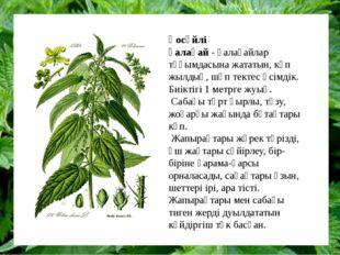 Қосүйлі қалақай-қалақайлар тұқымдасынажататын, көп жылдық, шөп тектес өсім