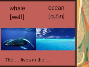 whale [weIl] ocean [quSn] The … lives in the …