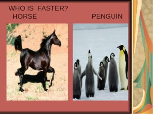WHO IS FASTER? HORSE PENGUIN