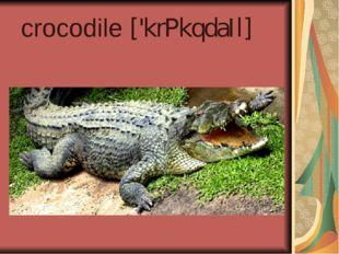 crocodile ['krPkqdaIl]