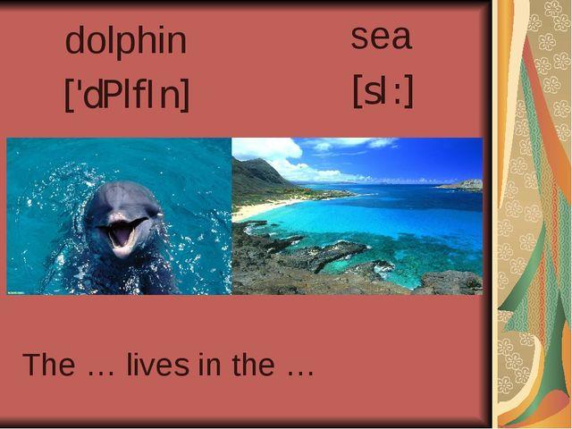 dolphin ['dPlfIn] sea [sI:] The … lives in the …