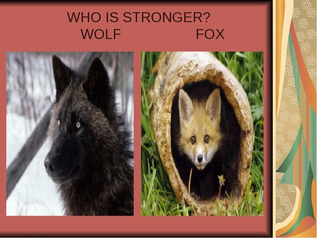 WHO IS STRONGER? WOLF FOX