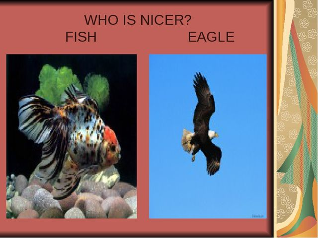 WHO IS NICER? FISH EAGLE
